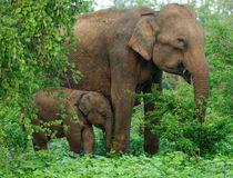 © World Animal Protection