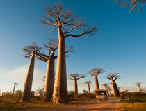 © Office National du Tourisme de Madagascar